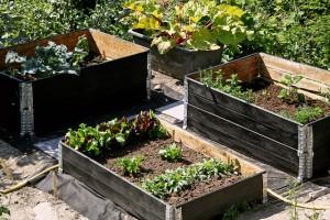 trädgårdspyssla_odla_i_pallkrage